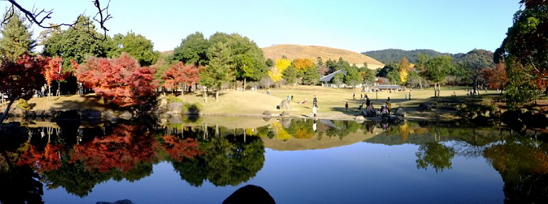 large_Nara_Momiji_2.jpg