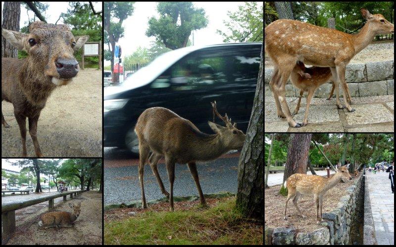 large_Nara_September_20102.jpg