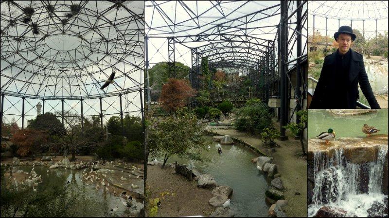 large_Osaka_Zoo1.jpg