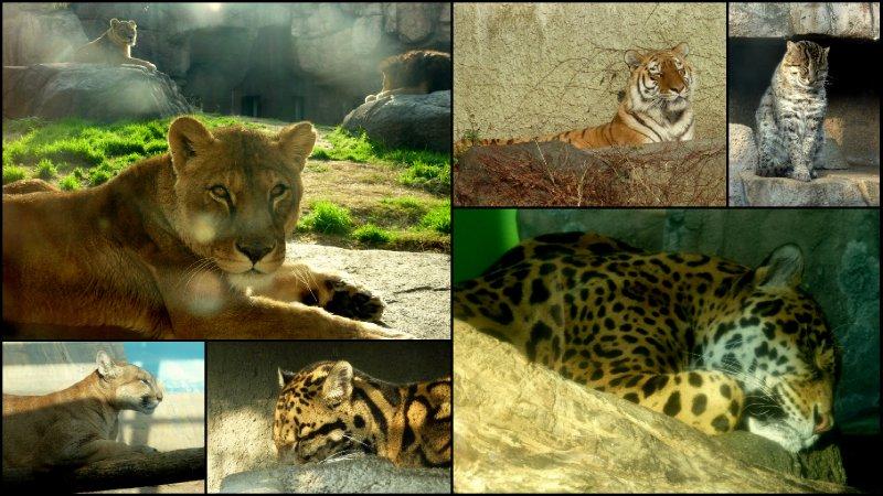 large_Osaka_Zoo4.jpg