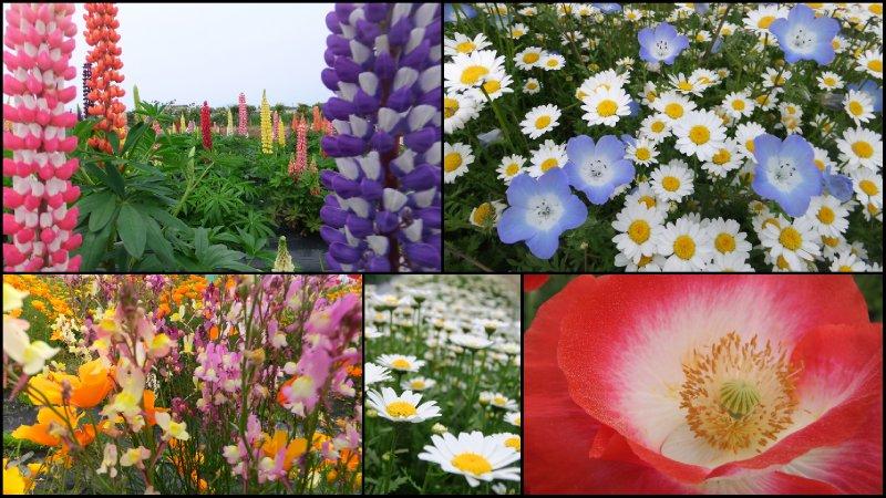 large_Spring_Scrapbook5.jpg
