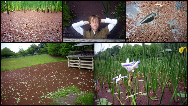 large_Uji_Botanic_Garden2.jpg