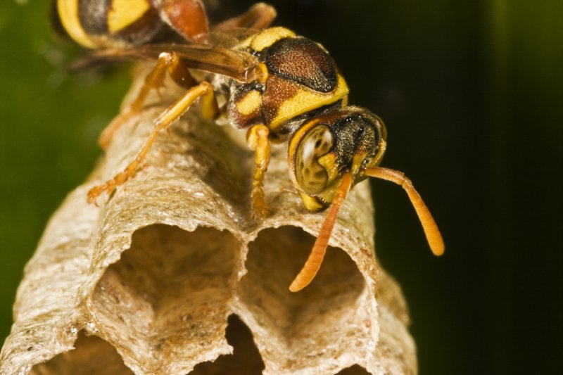 (Fake) Wasp and nest