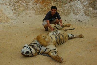 Tygri noha a Honza