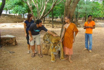 Tiger, monk and tourists