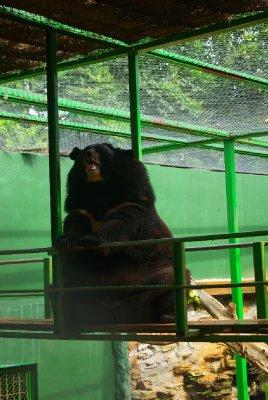 Asijsky medved