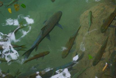 Erewan narodni park / rybky