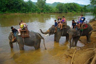 Sloni