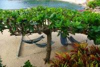 Tanote Bay - pohoda na hamakach