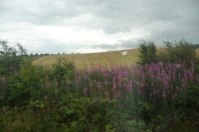 View_from_the_train.jpg