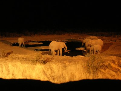 Elephants at a watering hole at night
