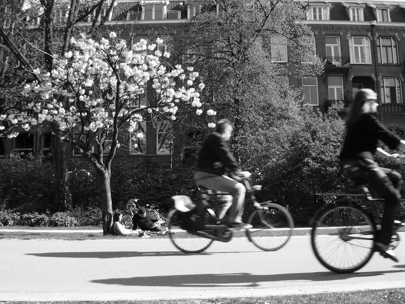 Cyclists in a park in Amsterdam
