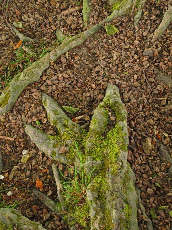 Tolkien trees