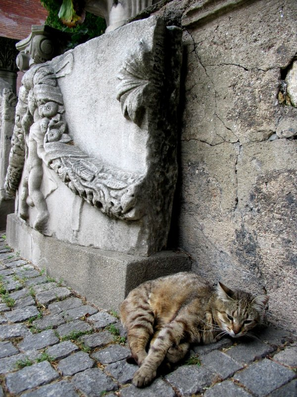 Archaeology Museum: Cat