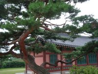 Lovely tree and building in South Korea