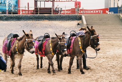 Donkeys in Blackpool