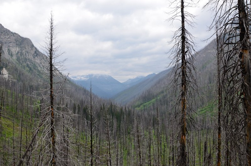 Remnants of the 2003 forest fire