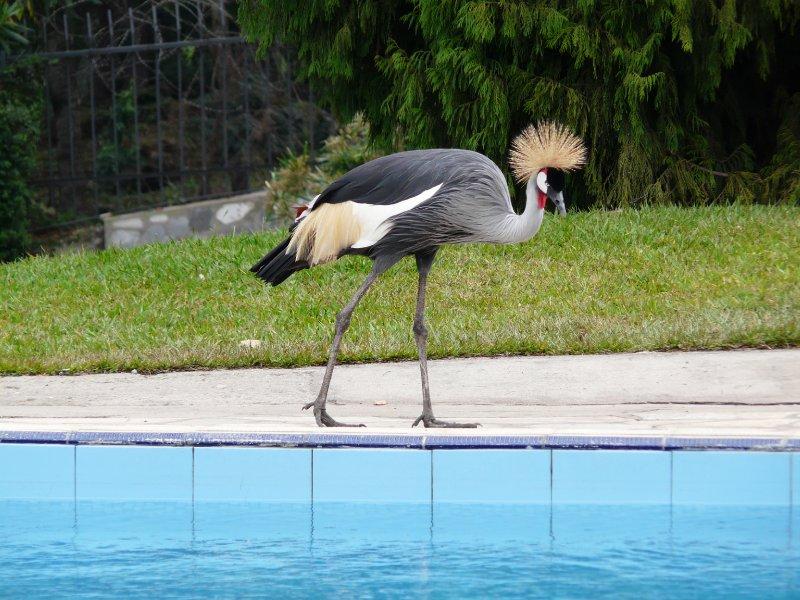 Crane at Stipp Hotel