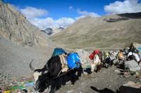 Yak transport, Kailash