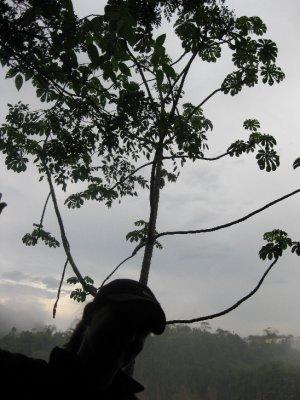 Cool_tree_Iguazu.jpg