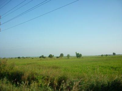 Cambodia rice paddies
