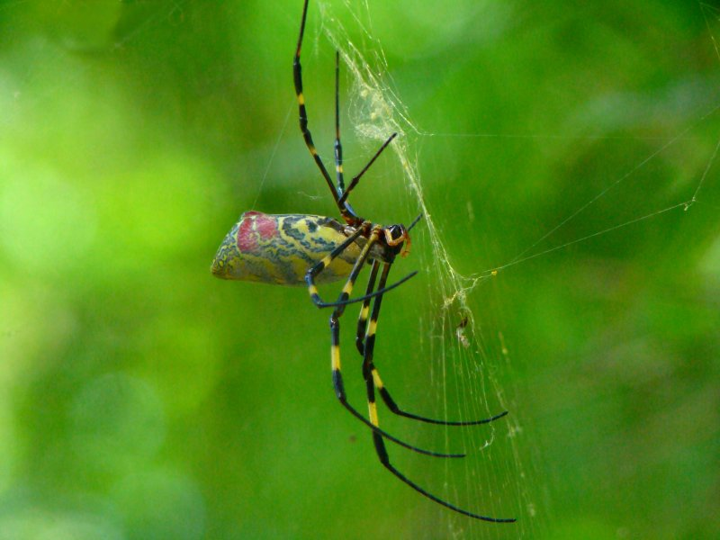 weaving a web