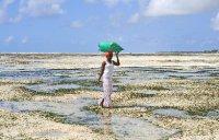 Harvesting Seaweed