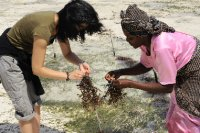 Seaweed Farming in Jambiani