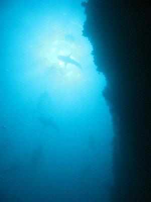 diving leg 087
