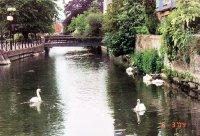 SALISBURY_..s_swans.jpg