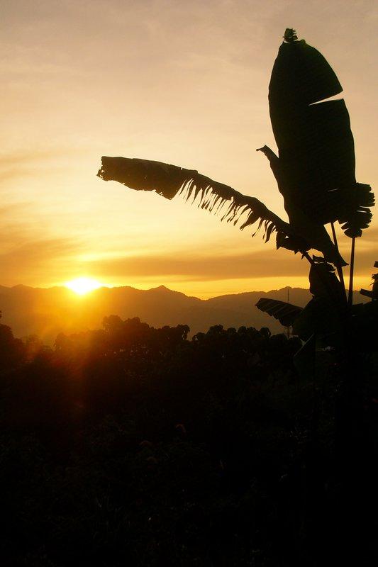 Jungle Sun