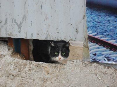 Cat in Tabriz