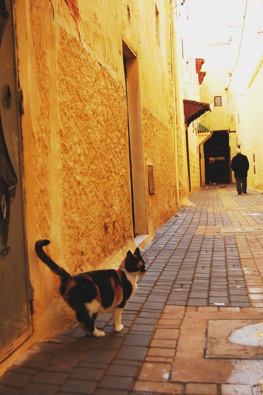 Cat in an alleyway