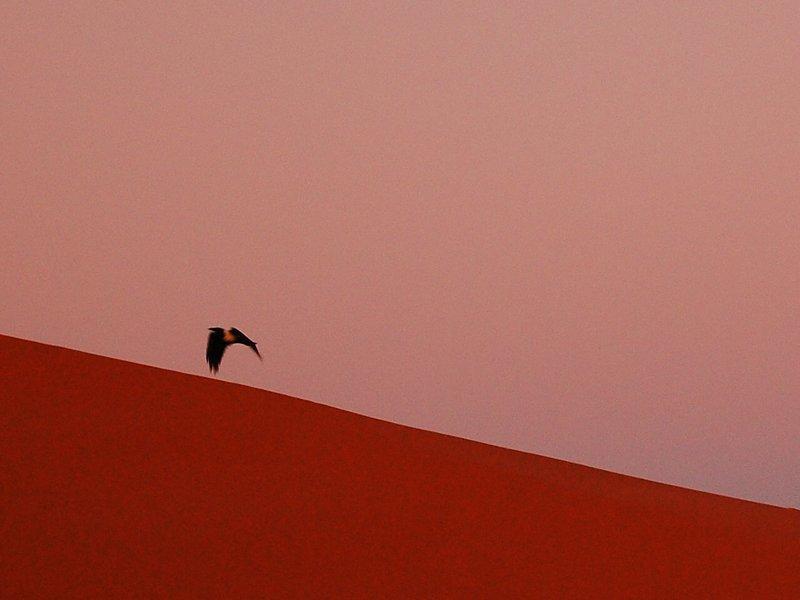 A bird by Dune 45