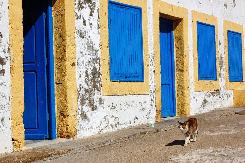 Cat and blue doors