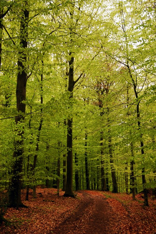 Fyn forest