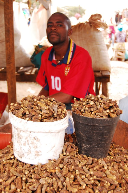 Catepillar seller at the market