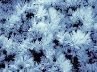 Snowflowers