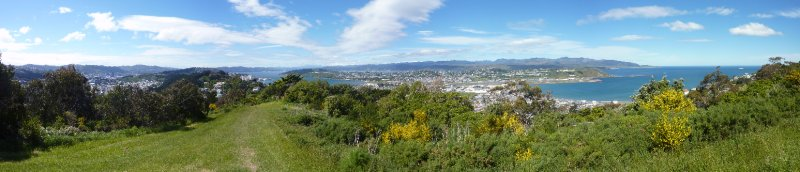 Lyall Bay View
