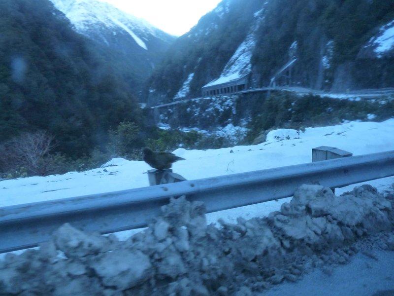 Avalanche gully