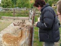 Feeding the deer at Boerderij 't Geertje, Zoeterwoude, Netherlands