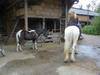 Horses and barn at Boerderij 't Geertje, Zoeterwoude, Netherlands