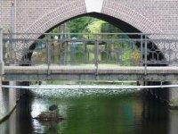 A water bird makes its nest in a canal running through the Hortus Botanicus, Leiden