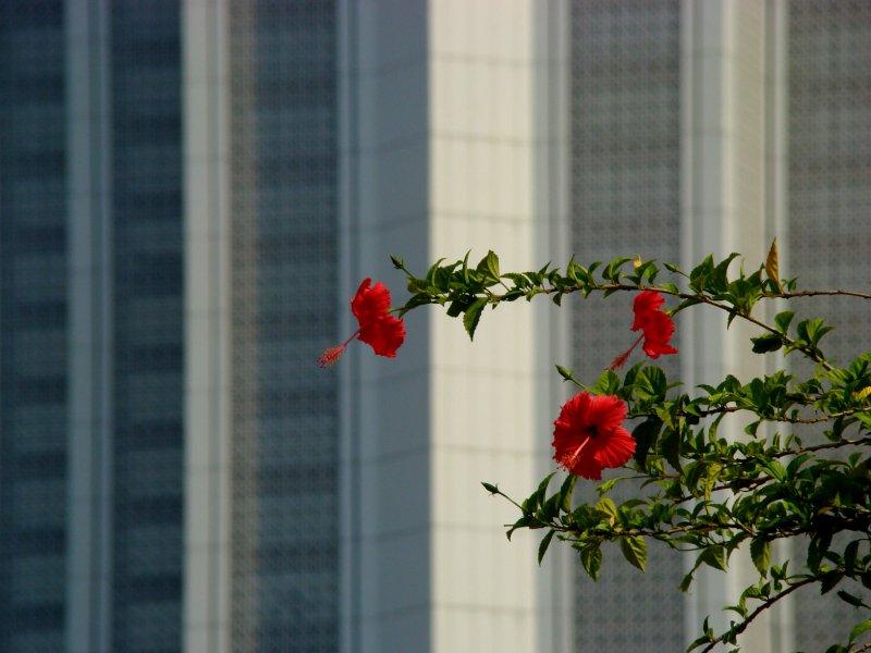 Flowers of KL