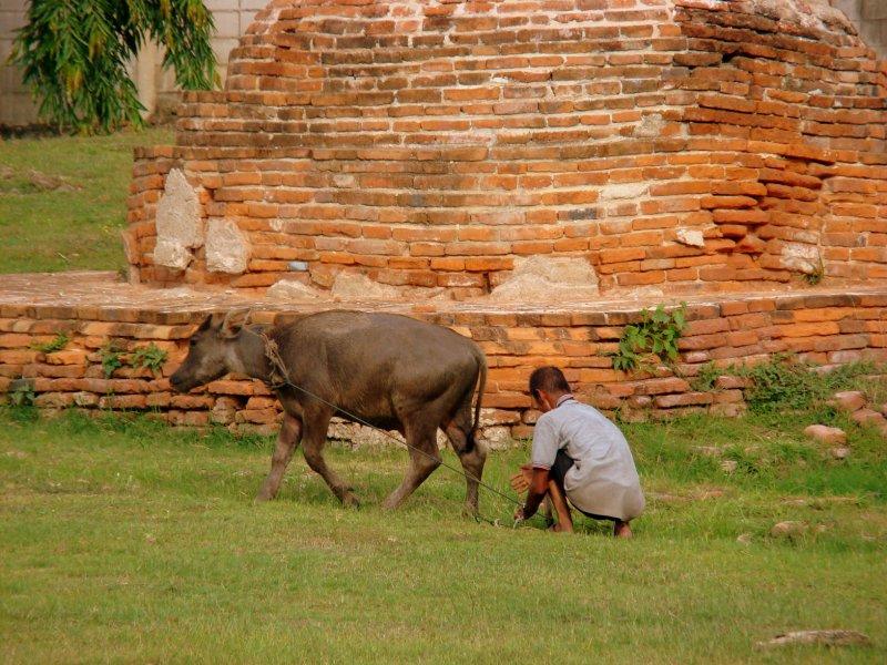 people of ayutthaya