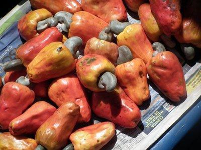 Cashew_Fruit.jpg