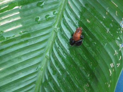 Tree_frog.jpg