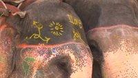 elephants love Jaipur