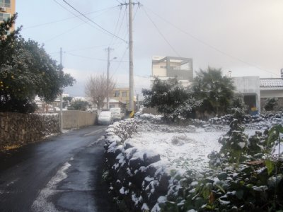 Snowy_Jeju..ica_094.jpg