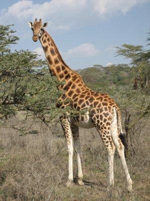 Africa 744